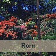 /Flora