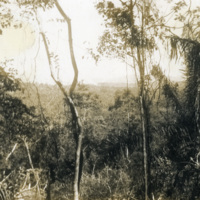 A picture of trees and dense foliage