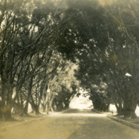 A road lined by trees