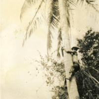 A soldier climbing a palm tree