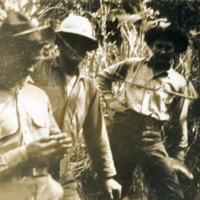 A picture of three soldiers surrounded by dense foliage