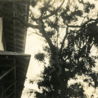 Building and trees