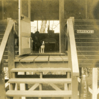 A dog stands in the doorway of a barracks