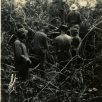 A group of soldiers in thick foliage