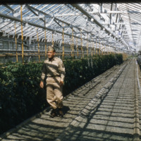 Unifomed man in a greenhouse