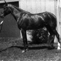 The horse Ann Arbor