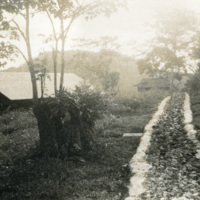 A pathway leading through the jungle