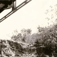 Trees under a steel bridge