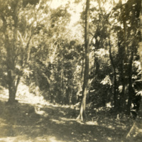 Trees and dense foliage